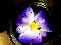 Carvings da flor do sabão Fotografia de Stock