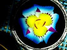 Carvings da flor do sabão Imagens de Stock Royalty Free