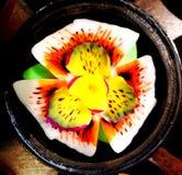Carvings da flor do sabão Fotos de Stock