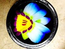 Carvings da flor do sabão Imagens de Stock