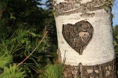 Carvings em uma árvore de vidoeiro Fotos de Stock Royalty Free