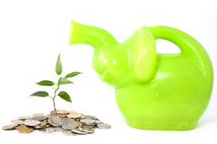 Cary and protect investment. Green plant on the white background business metaphor of saving money in the bank and protect royalty free stock photo