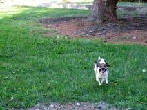 Carzy hund Arkivfoton