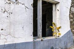 Casa abandonada con el árbol joven en ruines Imagen de archivo libre de regalías