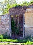 Casa abandonada e plantas cobertos de vegetação Foto de Stock Royalty Free