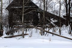 Casa abandonada e um cão no inverno foto de stock royalty free