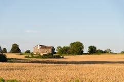 Casa abandonada isolada no campo amarelo Fotos de Stock