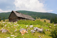 Casa abandonada nas montanhas de Carpathians Imagem de Stock
