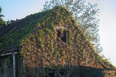 Casa abandonada velha coberta com a vegetação imagens de stock royalty free