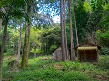 Casa abandonada vieja de la granja en la plantación del eucalipto en el Brasil imagen de archivo libre de regalías