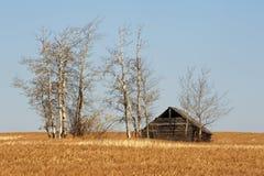 Casa abandonada y un campo del trigo maduro Fotos de archivo libres de regalías