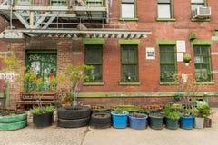 Casa abbandonata con le piante davanti  Fotografie Stock