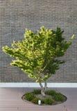 Casa al aire libre, árbol Fotos de archivo libres de regalías