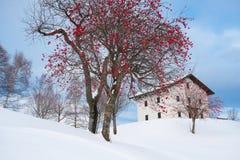 Casa alpina con neve Immagine Stock Libera da Diritti