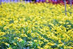 Casa amarilla de la flor Fotos de archivo