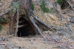 Casa animal no furo da árvore Imagens de Stock Royalty Free