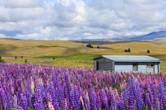 Casa atrás do campo de flor Fotos de Stock Royalty Free