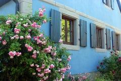 casa azul vieja con los obturadores y las rosas florecientes Fotos de archivo libres de regalías