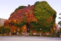Casa bajo las hojas del bosque Fotografía de archivo libre de regalías