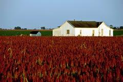 Casa blanca de la granja en campo rojo de la zahína Imagenes de archivo