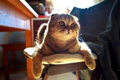 A casa bonita do sol do gato relaxa imagens de stock royalty free