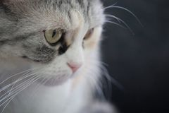 Casa bonito Cat Watching Around fotografia de stock