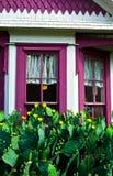 Casa branca, quadro de janela roxo e cacto de florescência Imagens de Stock