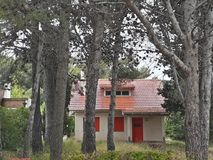 Fondo de cabaña en el bosque background of cabin in the forest. Casa chica con arboles en frente pinos nsmall house with trees in front of pines Stock Photography