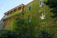 Casa con el balcón, uvas salvajes demasiado grandes para su edad en la ciudad vieja Tbilisi, Georgia Fotos de archivo libres de regalías