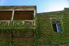 Casa con el balcón, uvas salvajes demasiado grandes para su edad en la ciudad vieja Tbilisi, Georgia Fotos de archivo