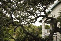Casa con el árbol de roble vivo. Imagen de archivo
