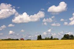 Casa con el tejado rojo en un fondo del campo amarillo y del cielo azul Imagenes de archivo