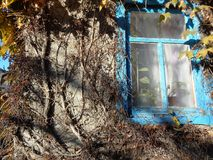 Casa con la hiedra foto de archivo libre de regalías