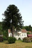 Casa con un árbol Imagen de archivo