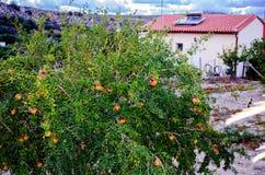 Casa con una granada en un pueblo en montañas de Creta en Grecia Imagen de archivo libre de regalías
