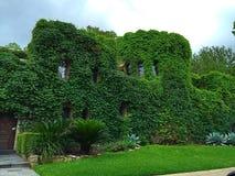 Casa cubierta en hiedra Imagen de archivo libre de regalías