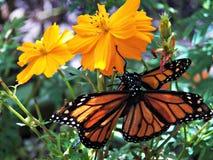Casa da borboleta da angra da faia Fotografia de Stock