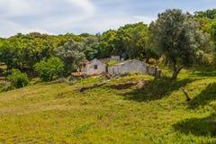 A casa da exploração agrícola e a árvore de cortiça no Santiago fazem Cacem Imagem de Stock Royalty Free