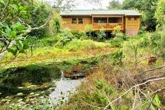 Casa da floresta ao lado da lagoa Imagem de Stock Royalty Free