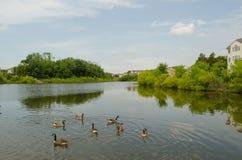 Casa da lagoa de água Fotos de Stock Royalty Free