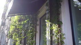 Casa da natureza das árvores da planta filme