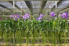 Casa da orquídea imagem de stock royalty free