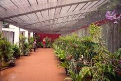 A casa da orquídea Fotos de Stock Royalty Free