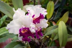 A casa da orquídea A flor da orquídea Imagens de Stock Royalty Free