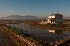 A casa da quinta com arroz coloca no delta de Ebro Imagem de Stock