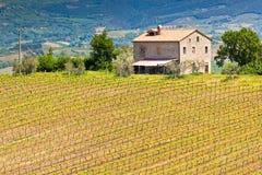 Casa da quinta e paisagem do vinhedo, Toscânia Imagem de Stock