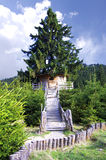 Casa de árvore imagens de stock royalty free