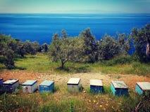 Casa de abeja Foto de archivo