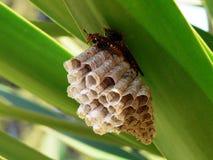 Casa de abeja Imágenes de archivo libres de regalías