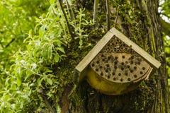 Casa de abeja Fotografía de archivo